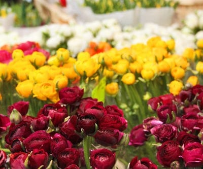 A Sunday morning at Columbia Road Flower Market