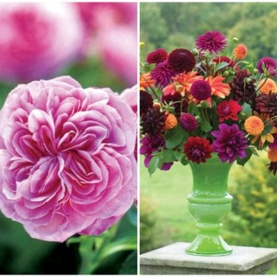 Florist Profile – Sarah Raven