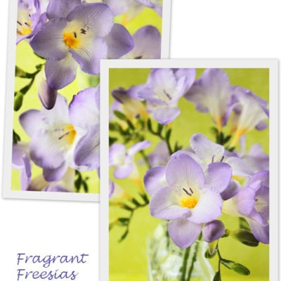 Freesia – a beautifully scented flower