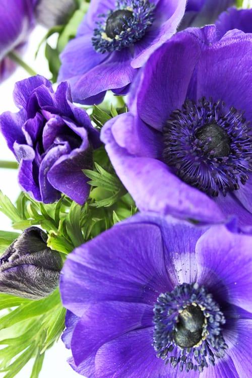 9 tips to make your cut flowers last longer flowerona. Black Bedroom Furniture Sets. Home Design Ideas
