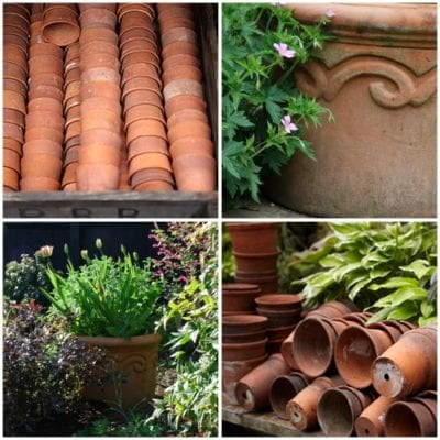 Flowers In Pots : The Fundamentals – Terracotta Pots