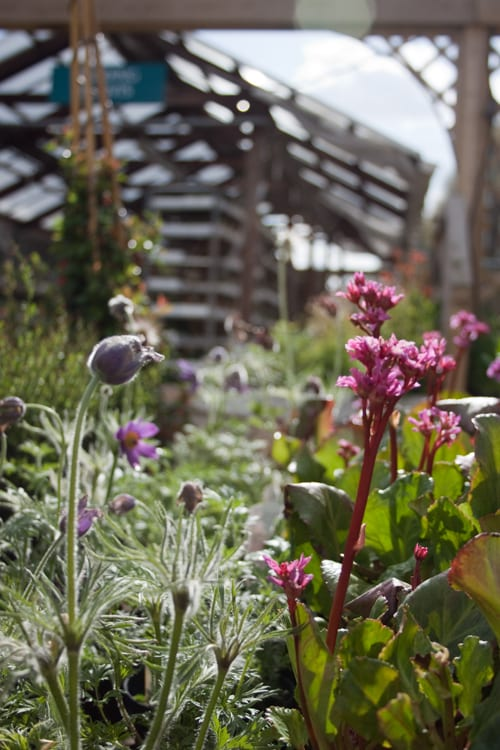 Garden Centre: A Sunny Spring Day At Fulham Palace Garden Centre In