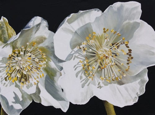 small flower paintings introducing artist sarah caswell flowerona