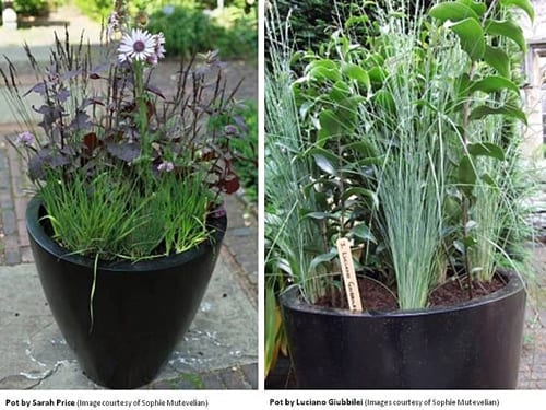 Flowers in Pots : Inspiration from Britain's top gardeners, designers & writers