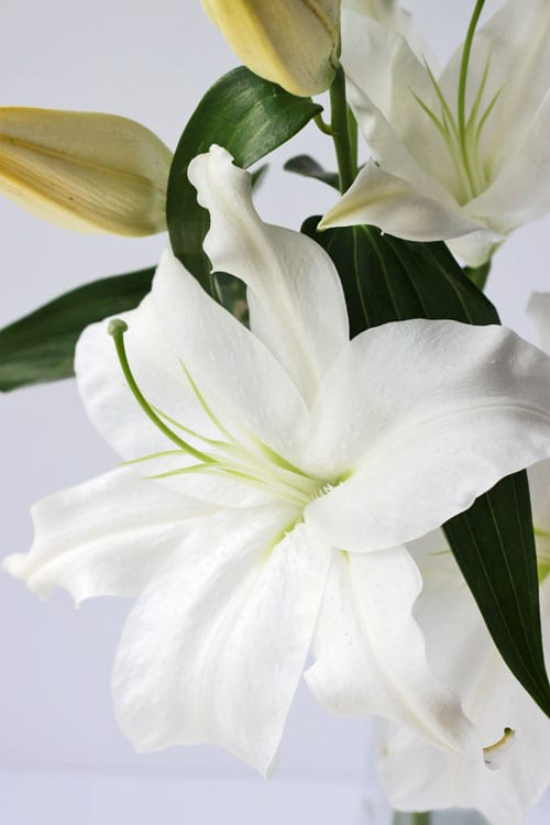 How do you feel about highly scented white lilies?