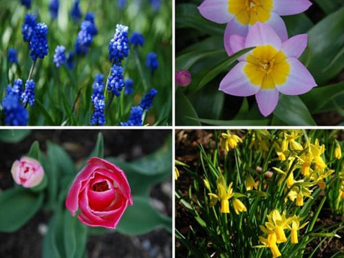 Garden flowers now is the time to plant your spring flowering bulbs garden flowers now is the time to plant your spring flowering bulbs mightylinksfo