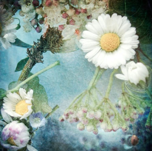 Due-Alberi-Flower-Image