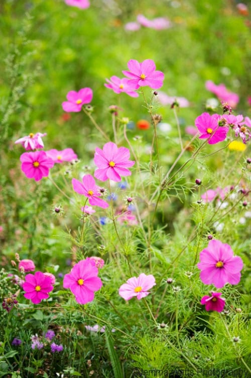 Flowers-by-Jemma-Watts-Photography_-Wild-flowers