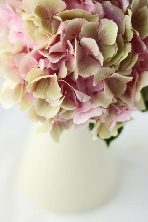 My floral-inspired blog, Flowerona, is one year old!