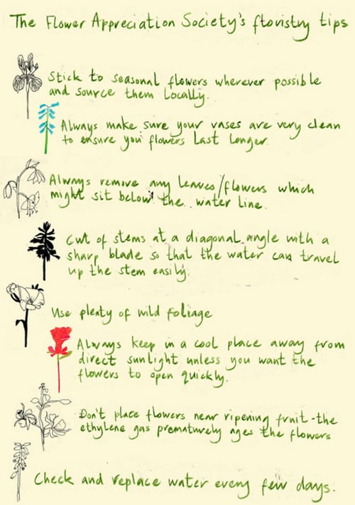 Flower Appreciation Society - our tips with Anna's illustrations copy