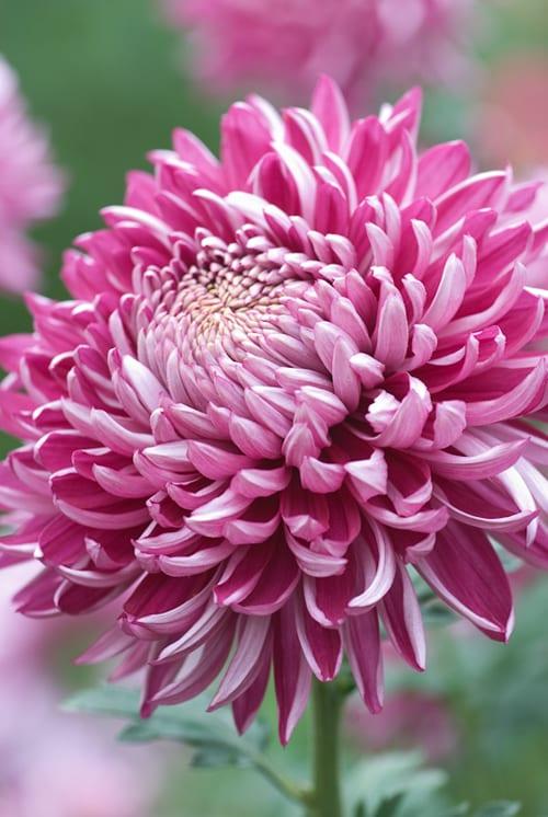 Heather Edwards Flower Photography