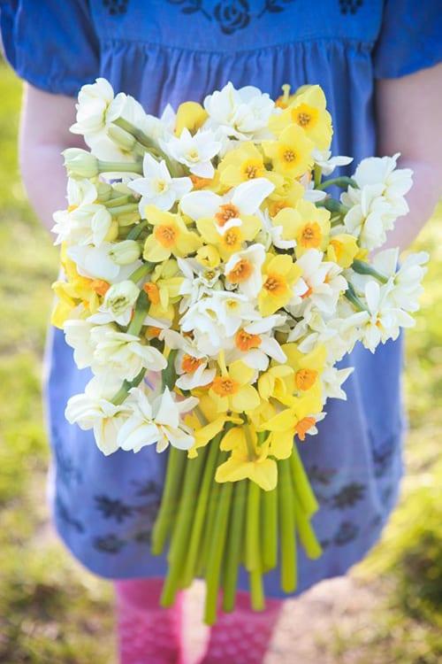 Scillly Flowers - narcissi