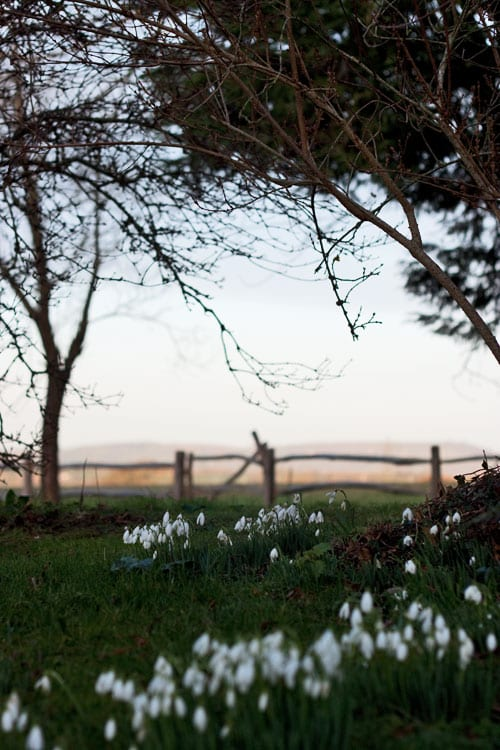 Snowdrops_Rona_Wheeldon_Flowerona