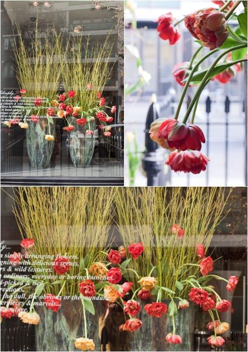 Neill-Strain-Tulipmania-Flowerona