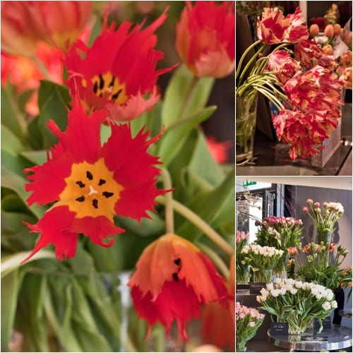 Visit to florist Neill Strain's Tulipmania event – now taking place in London