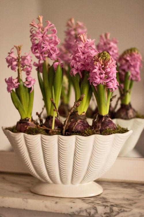 Pink-Hyacinths