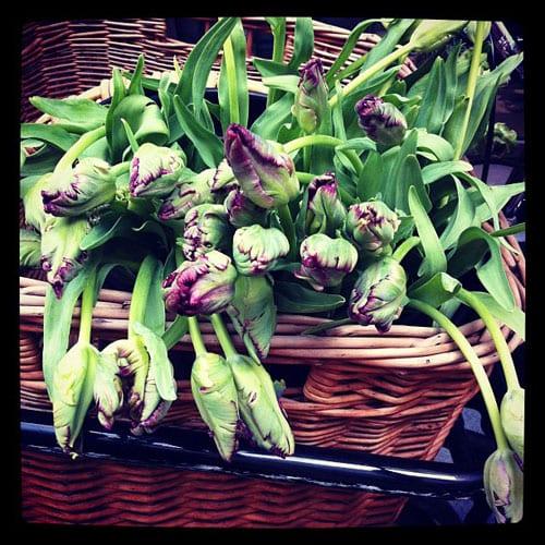 Tulips-Flowerona