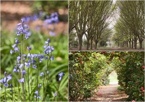 Bushy Park - Flowerona