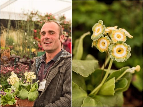 2012-RHS-Cardiff-Show-Flowerona-Simon-Lockyer-Auriculas