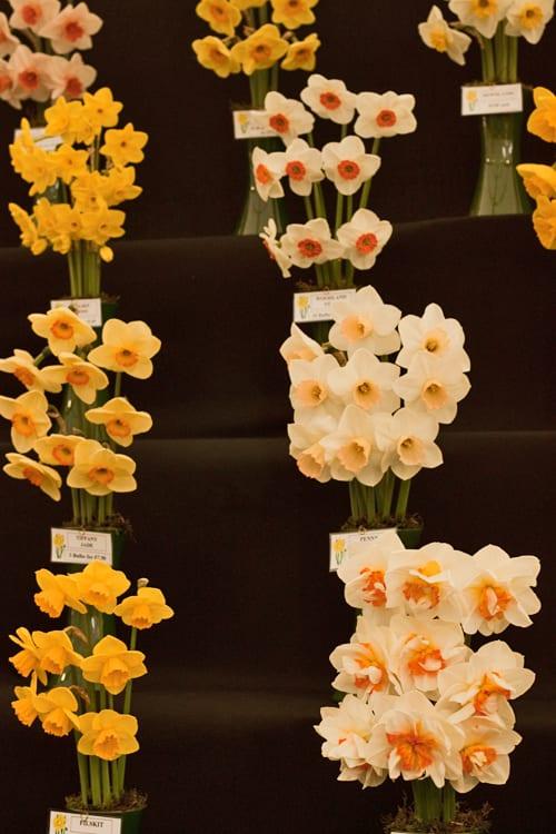 2012-RHS-Cardiff-Show-Flowerona