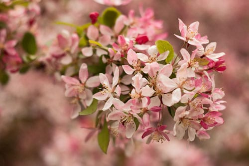 Blossom-at-Kew-Flowerona
