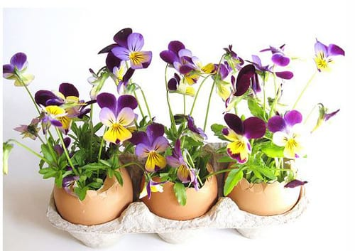 Egg shells arrangement with purple and yellow flowers picture