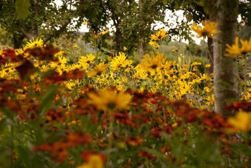 Warm-yellows-and-reds-in-the-flower-garden-Lisa-Cox-Garden-Designs