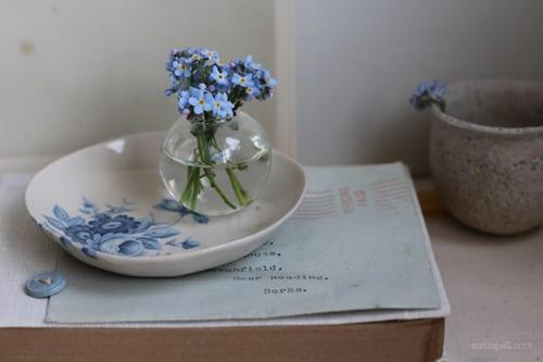 forget-me-not-Sania-Pell
