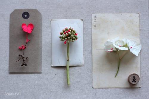 sania-pell-fluro-flowers
