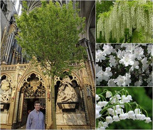 Flowerona reflects: cornflowers & corridors