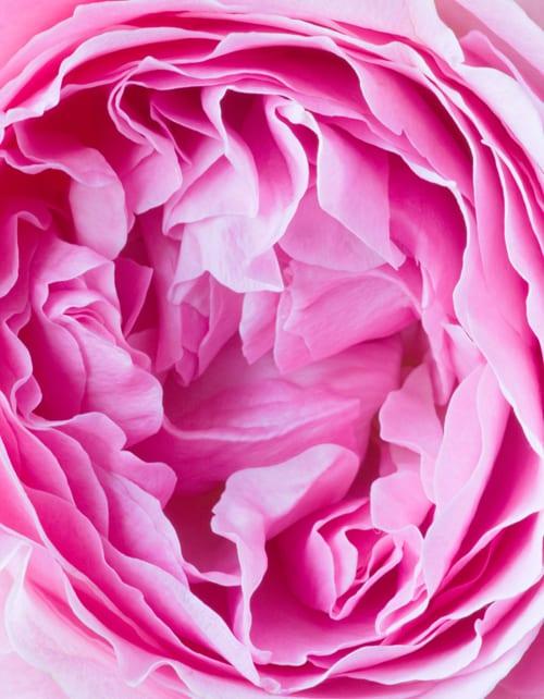 Clive-Nichols-Garden-&-Flower-Photographer