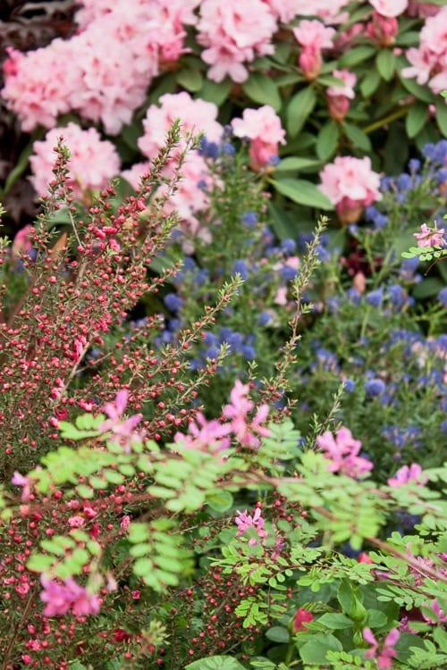 Hillier-Nurseries-&-Garden-Centres-Chelsea-2012-Flowerona
