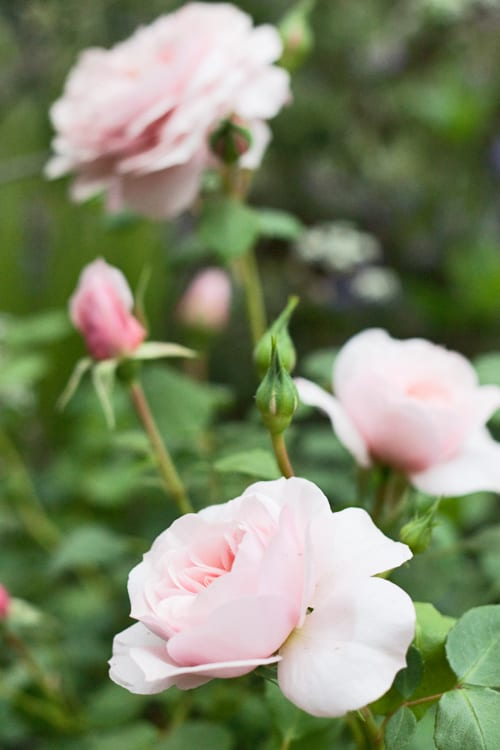 Jo-Thompson-Show-Garden-Chelsea-2012-Flowerona