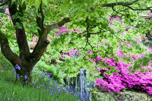 Wakehurst-Place-Flowerona