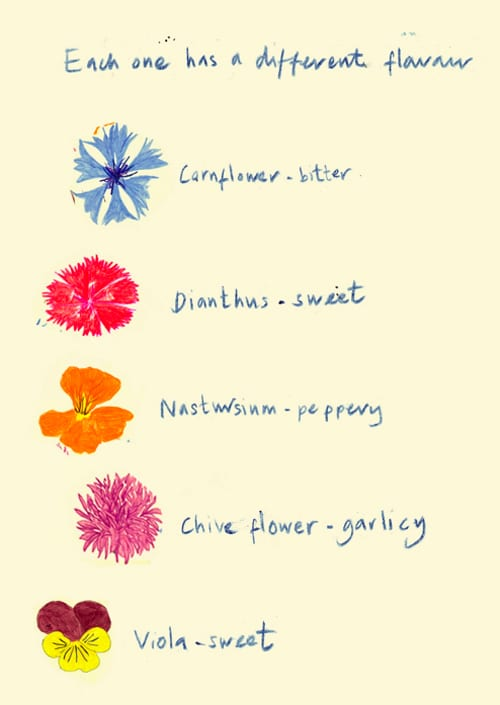 Anna's-flower-illustrations-The-Flower-Appreciation-Society
