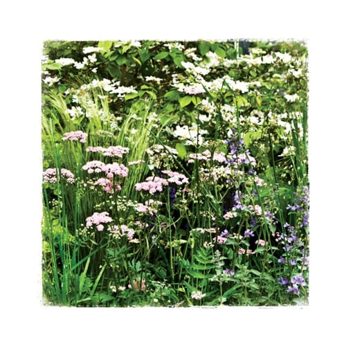 CHL6 Meadow Chelsea Garden Collection Dipingo Design