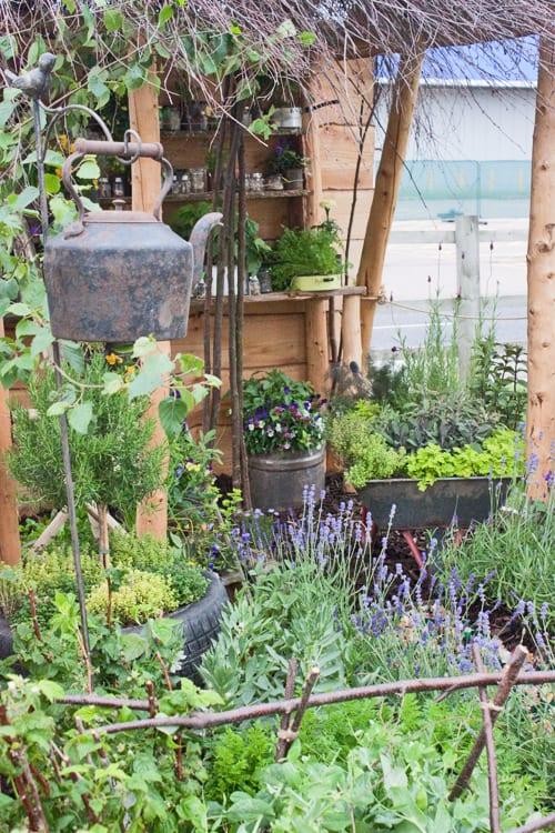 Georges-Marvellous-Garden-BBC-Gardener's-World-Live-2012-Flowerona