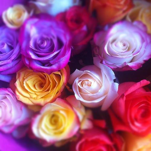Only-Roses-Flowerona