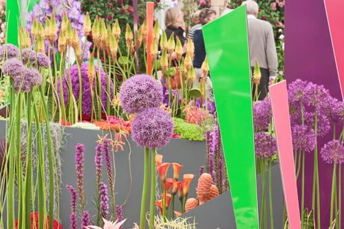 RHS-Chelsea-Flower-Show-2012-The-Message-Interflora-Flowerona