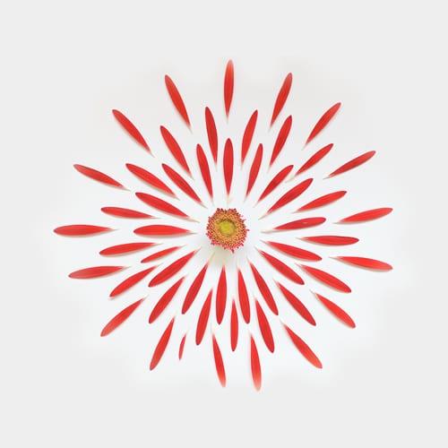 gerbera-exploded-flowers-fong-qi-wei