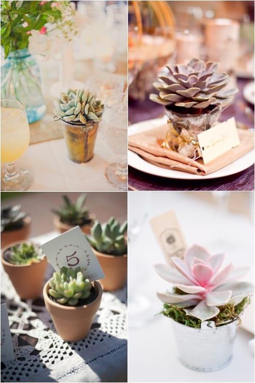 Style Me Pretty Succulents