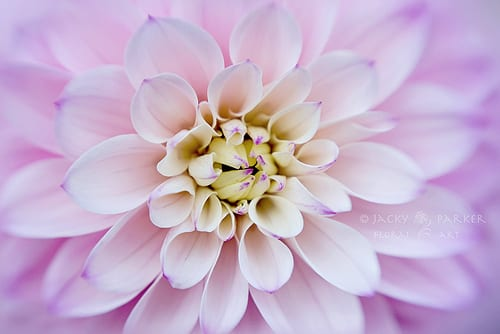 Jacky Parker Flower Photography