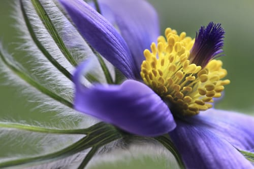 beautiful macro images from the international garden photographer of