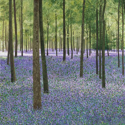 Bluebell-Wood-Susan-Entwistle