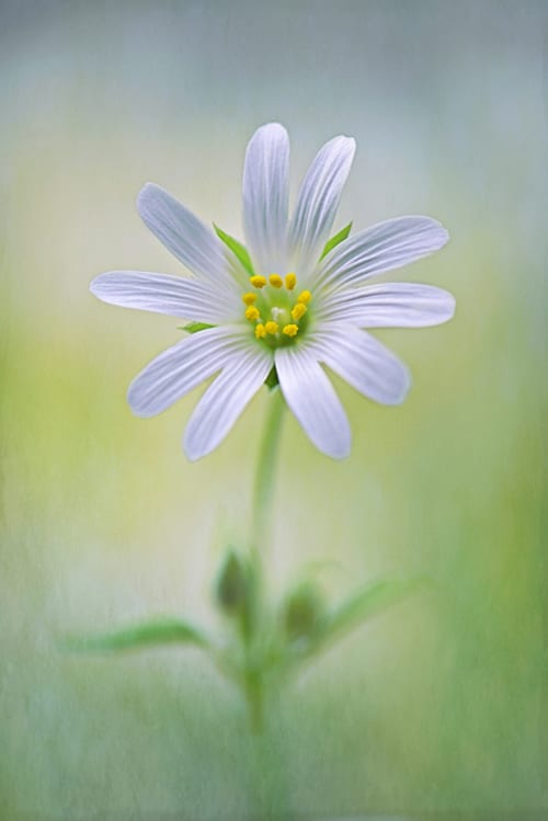 Jacky-Parker-Little-Stichwort--IGPOTY-Macro-Art-2012 - Winner