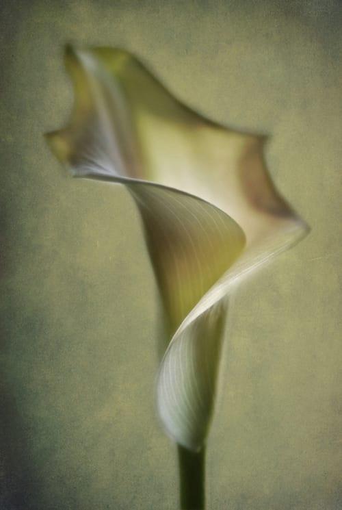 Lotte-Andersen-Pedersen-Calla-Lily-IGPOTY-Macro-Art-2012-Finalist