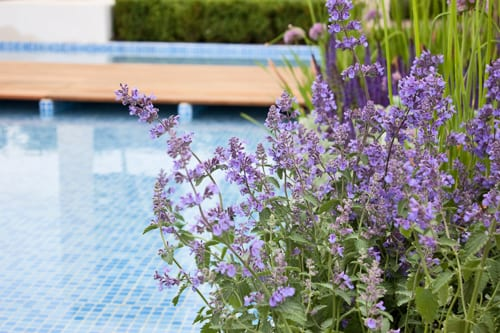 RHS Hampton Court Palace Flower Show 2012 – Jack Dunckley's Show Garden – The Italian Job
