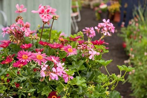 RHS-Hampton-Court-Palace-Flower-Show-Preserving-the-Community-Flowerona