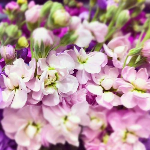 Stocks-Flowerona