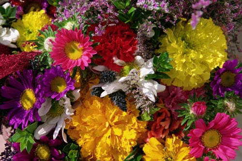 Flowers from the Farm…A nationwide network of British cut flower growers